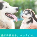 家族の一員として愛犬は口がきけないから遺伝子検査をして目に見えない健康を管理したい #犬 #Dog #愛犬 #ペット