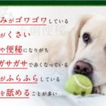 愛犬の健康長寿を願えば食を考え体内から健康管理がおすすめ #愛犬 #犬 #いぬ #イヌ #Dog