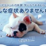 愛犬や愛猫などペットの排便が臭い時は体調も心配です #犬 #愛犬 #猫 #ペット