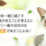 大切な猫にも安心安全で食いつきの良い餌は健康にも良くて長生きします #猫 #ねこ #ネコ #Cat